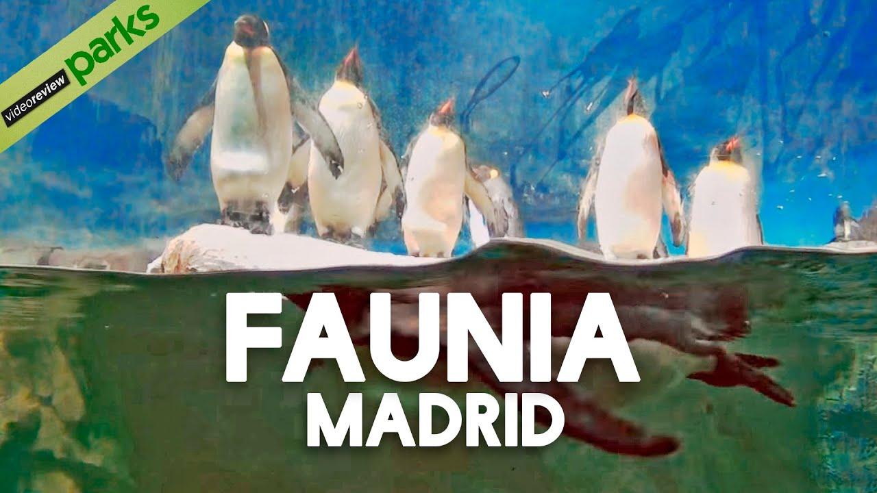 Conocer jovenes en Madrid–263035