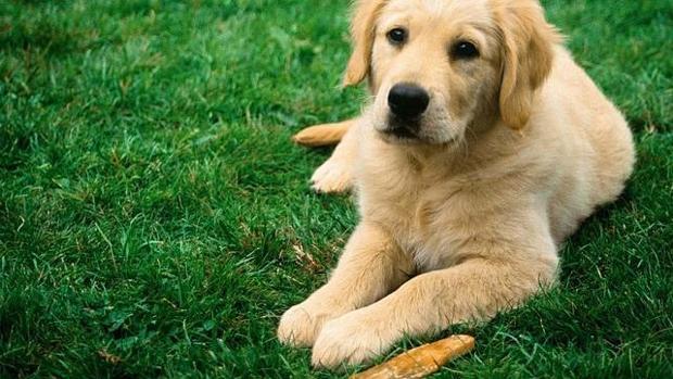 Doggie dating citas–262760