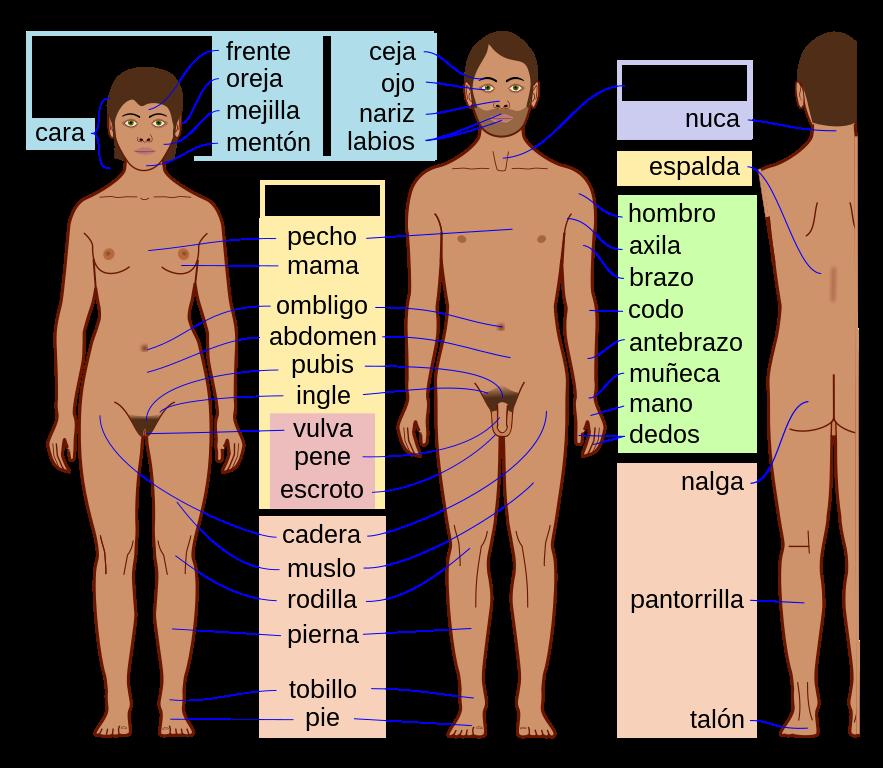 Conocer personas en Medellin–573778